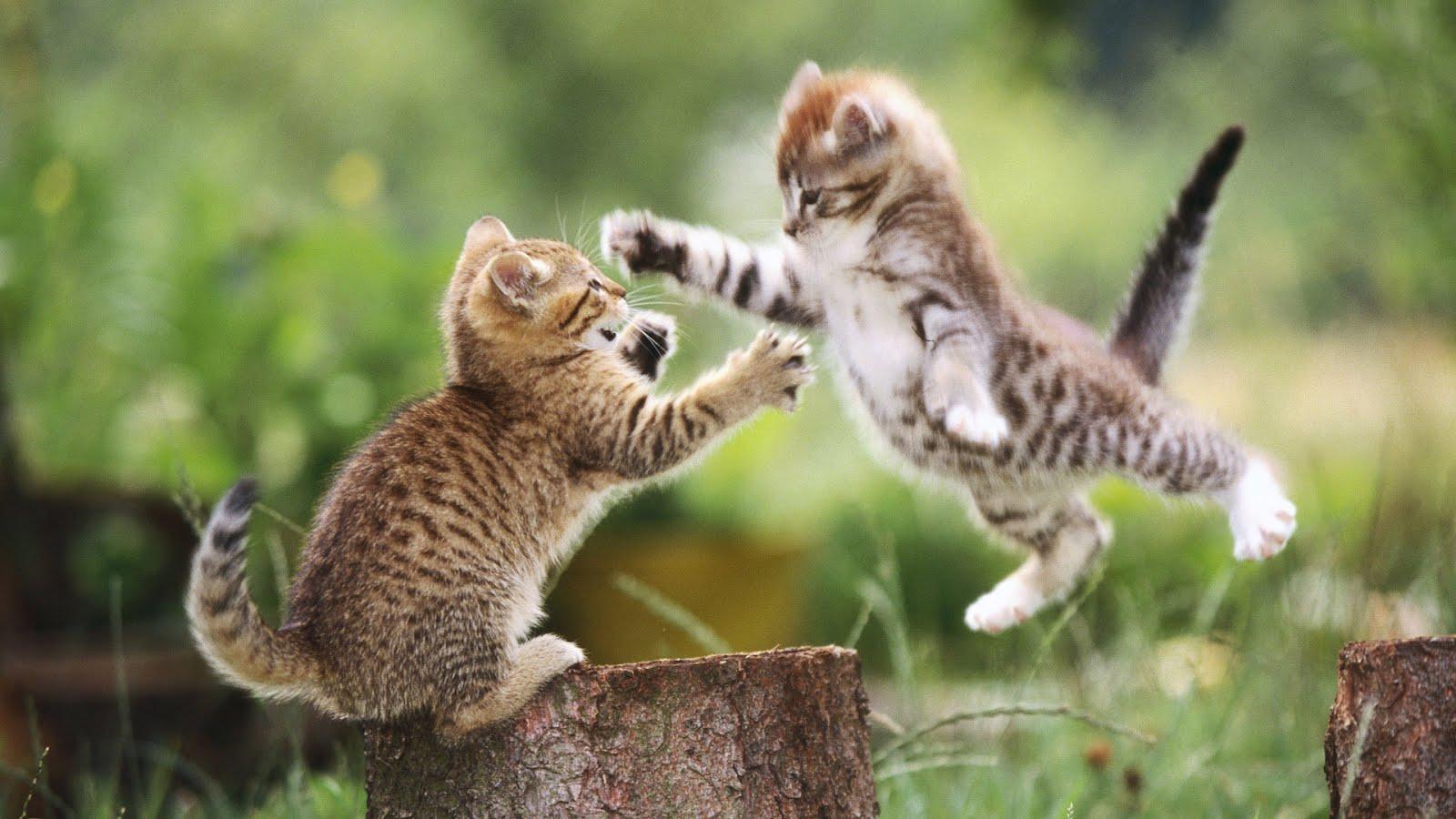 cat wallpaper 24248