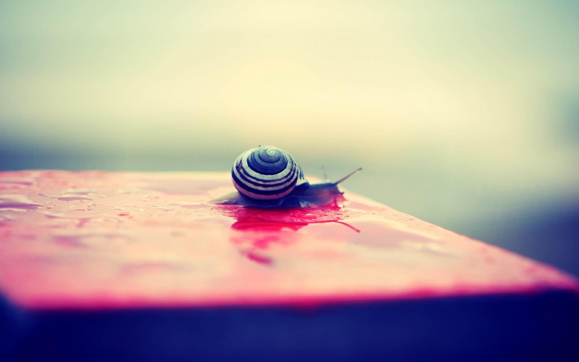 cool snail wallpaper 35683