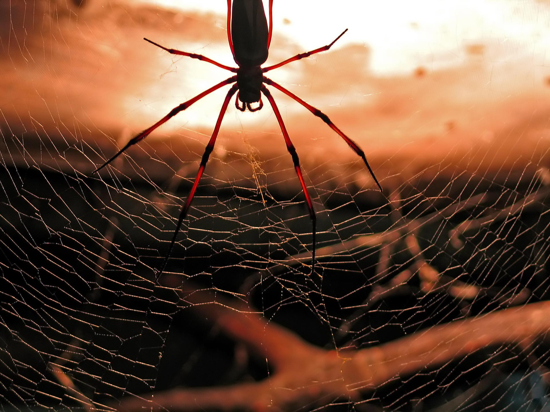 cool spider wallpaper 23755