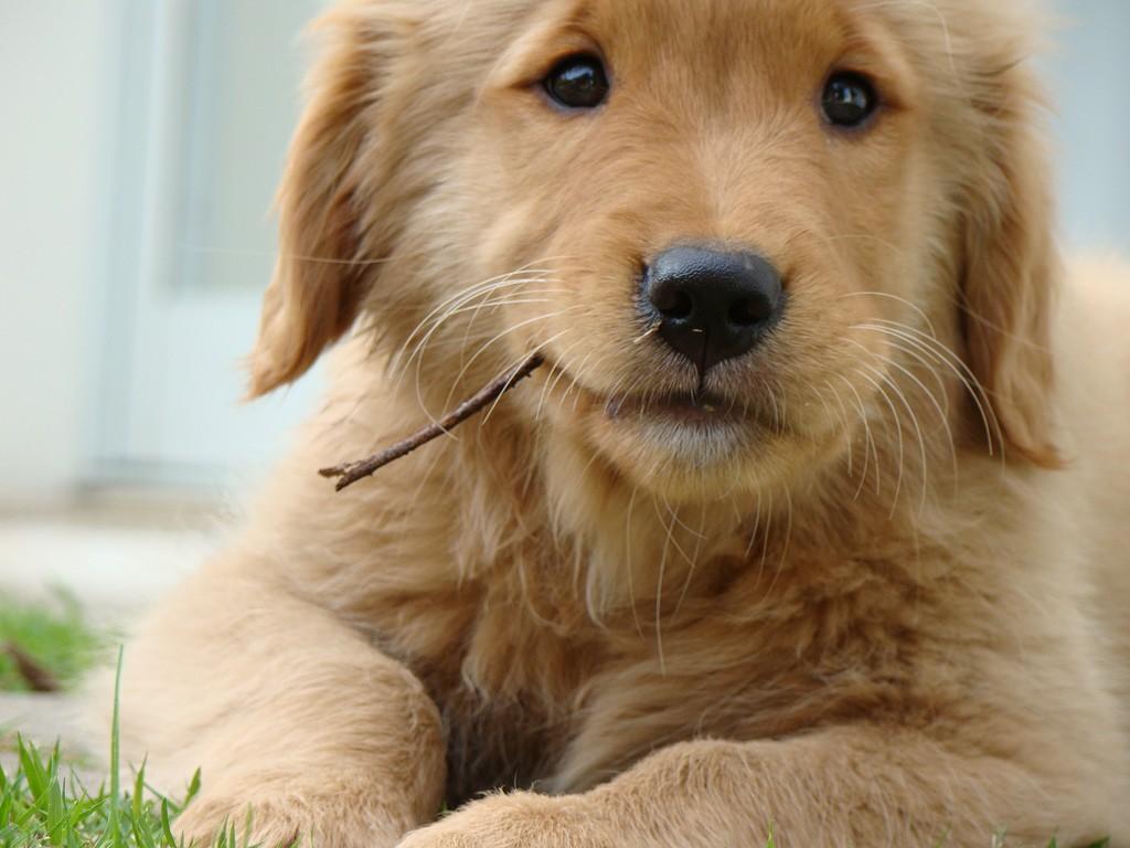 cute dogs 14454