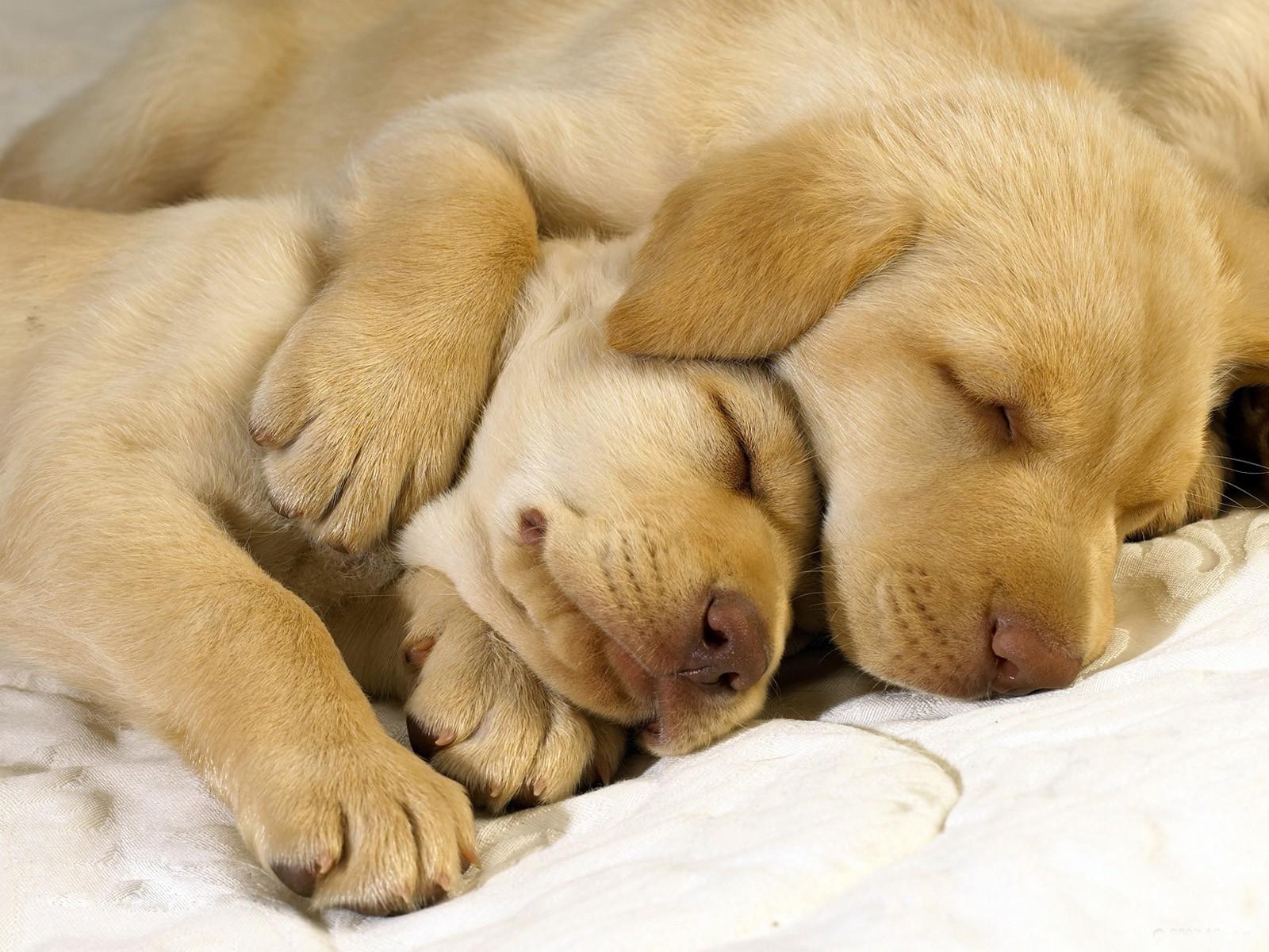cute dogs 14455