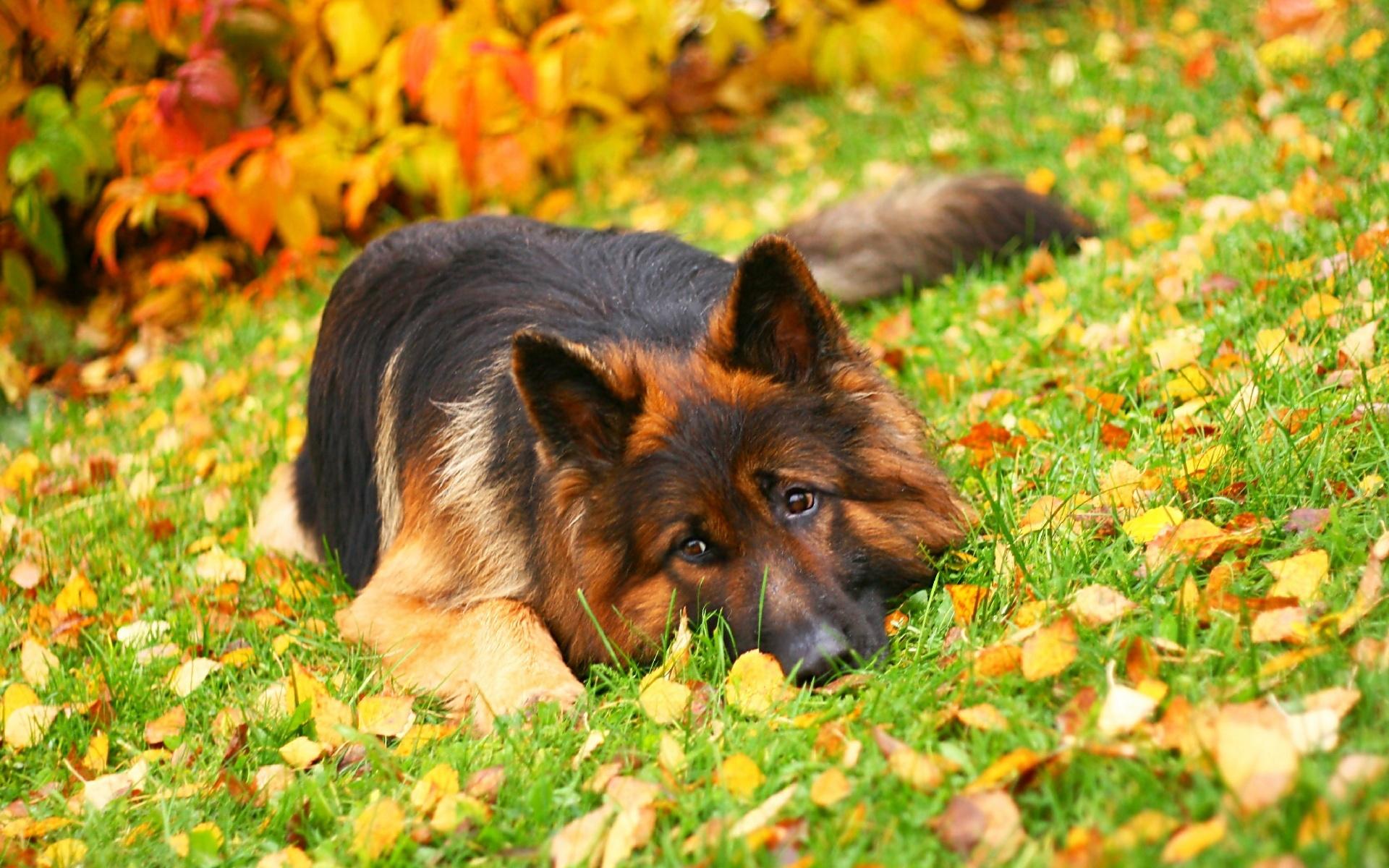 cute dogs 14463