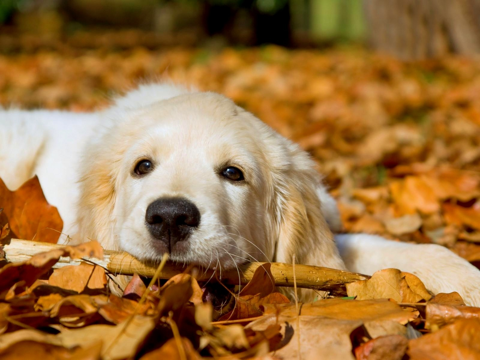 cute dogs 14466