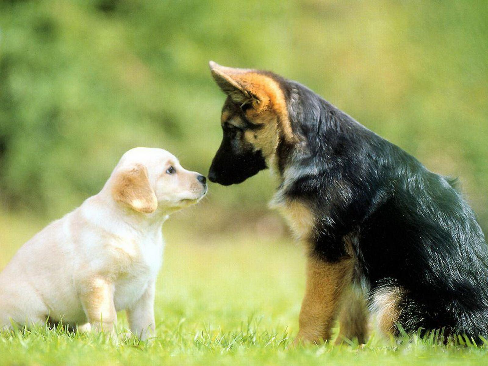 cute dogs 14468