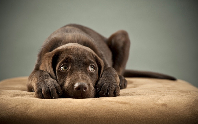 cute dogs 14472