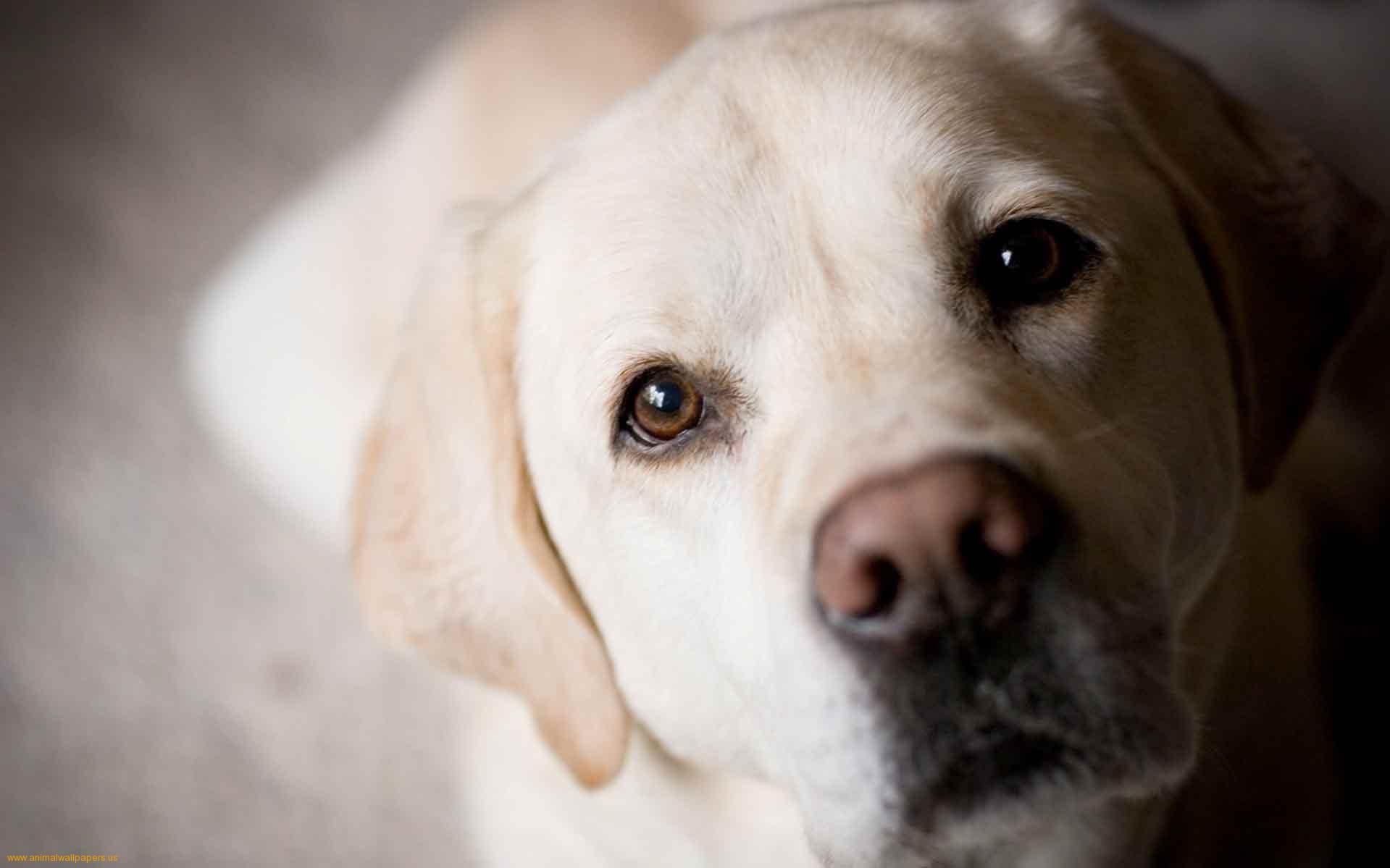 cute dogs 14473