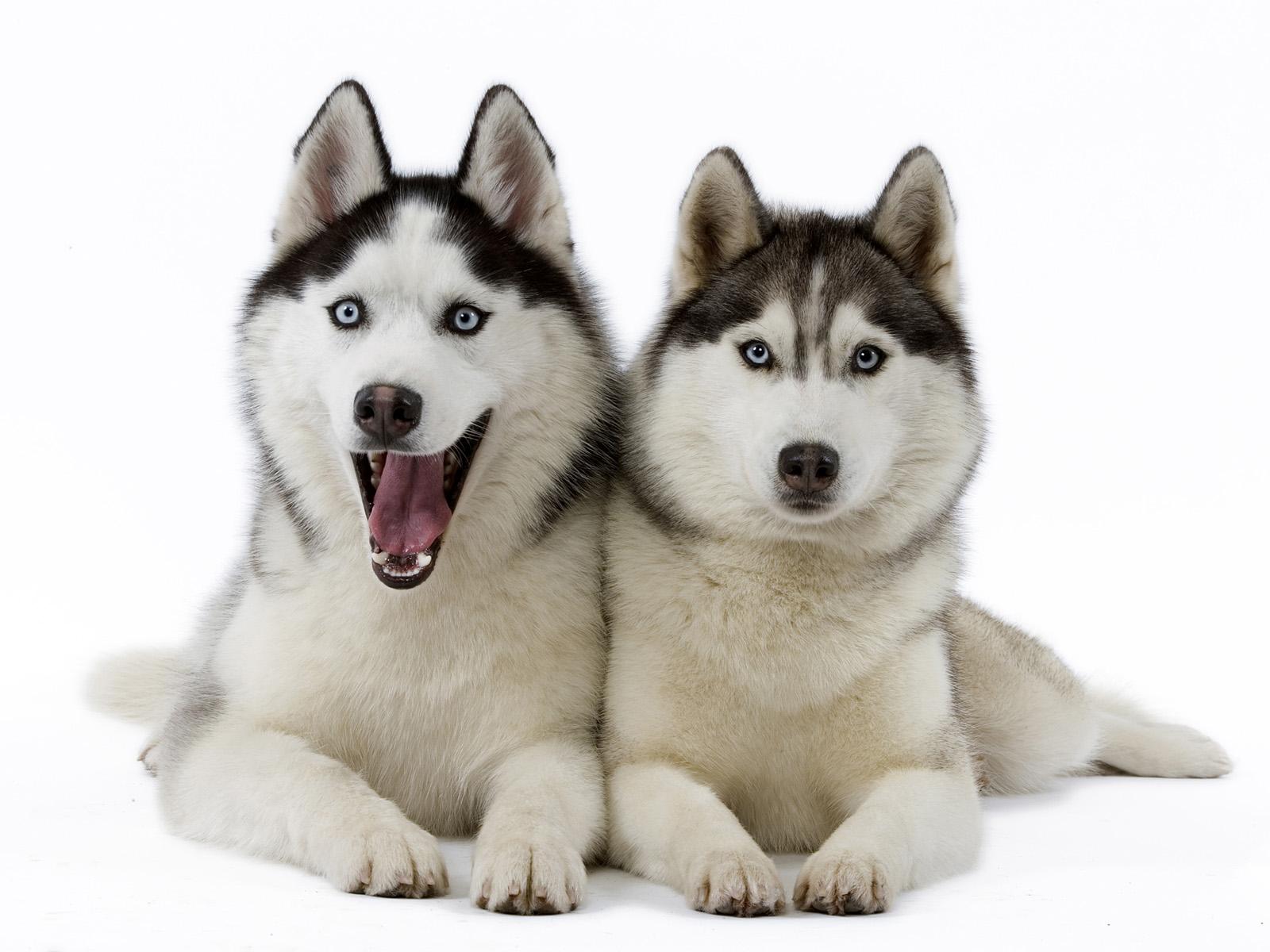 cute dogs 14475