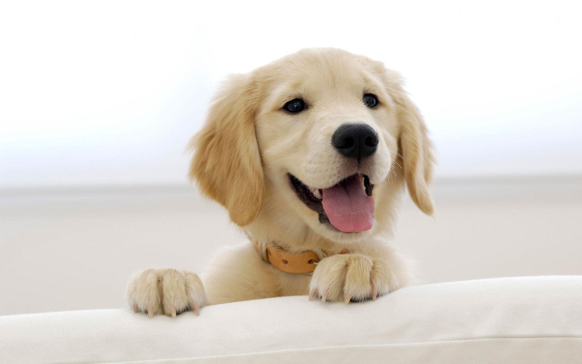 cute dogs wallpaper 14449