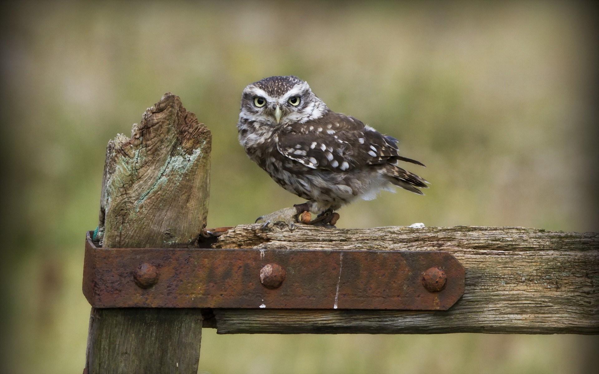 cute owl wallpaper 15769