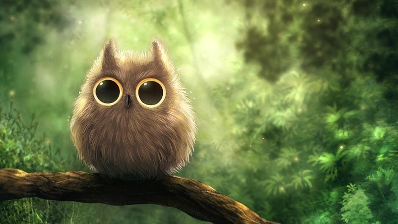 cute Owl Love Wallpaper : cute Owl Wallpaper 15778 1280x720 px ~ HDWallSource.com