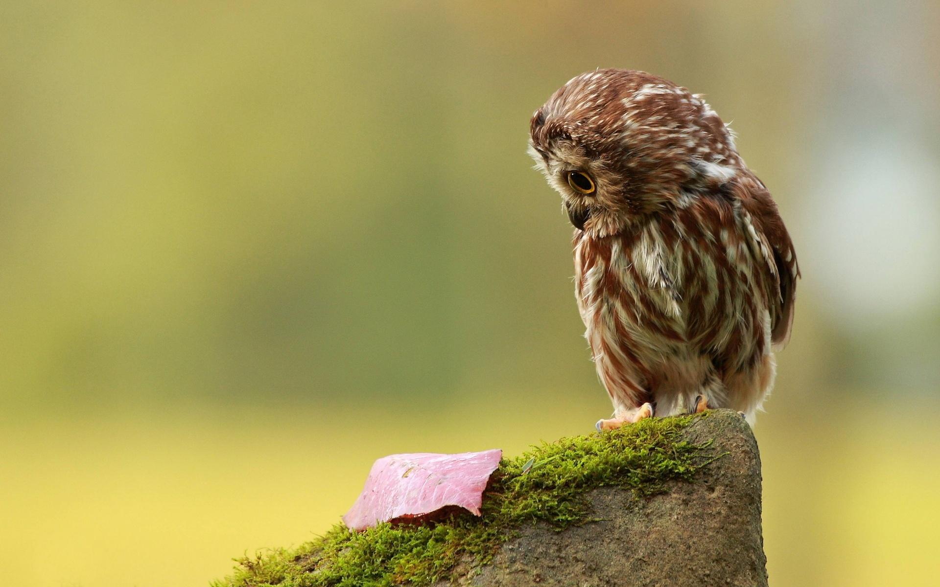 cute owl wallpaper 15780