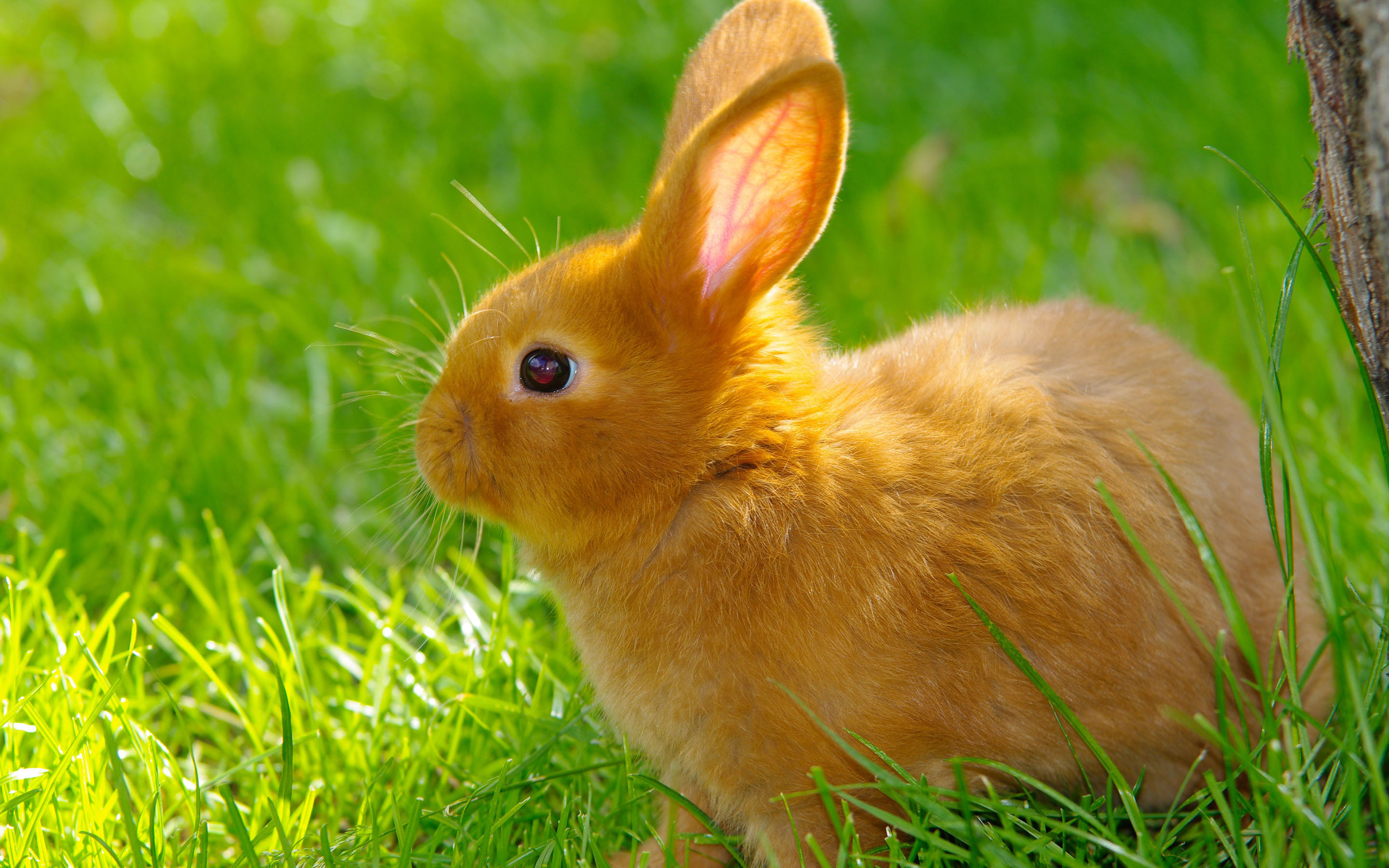 cute rabbit 35235