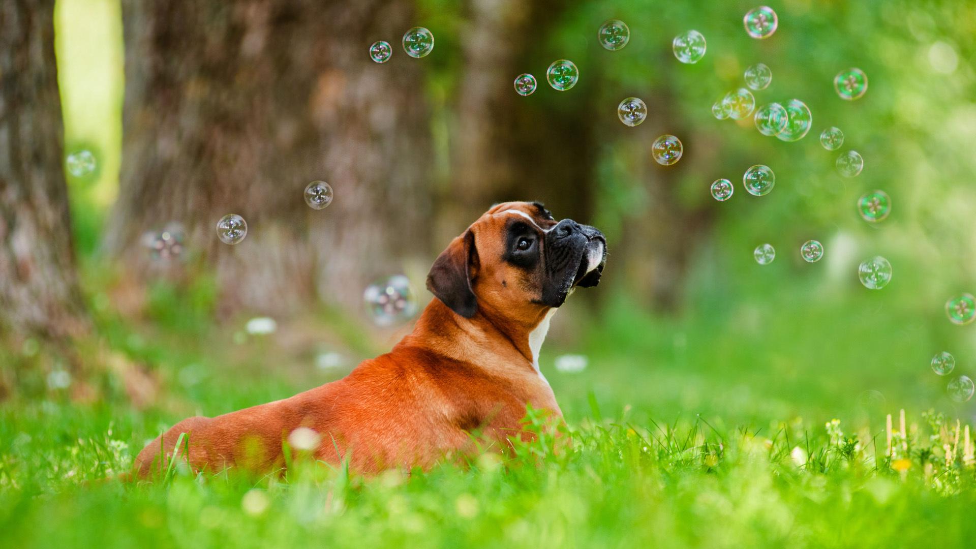 cute soap bubbles wallpaper 35000