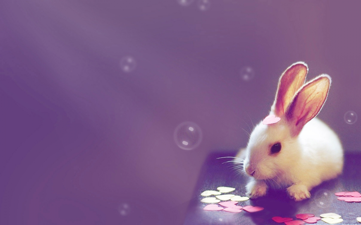 cute wallpapers 15723 1440x900 px
