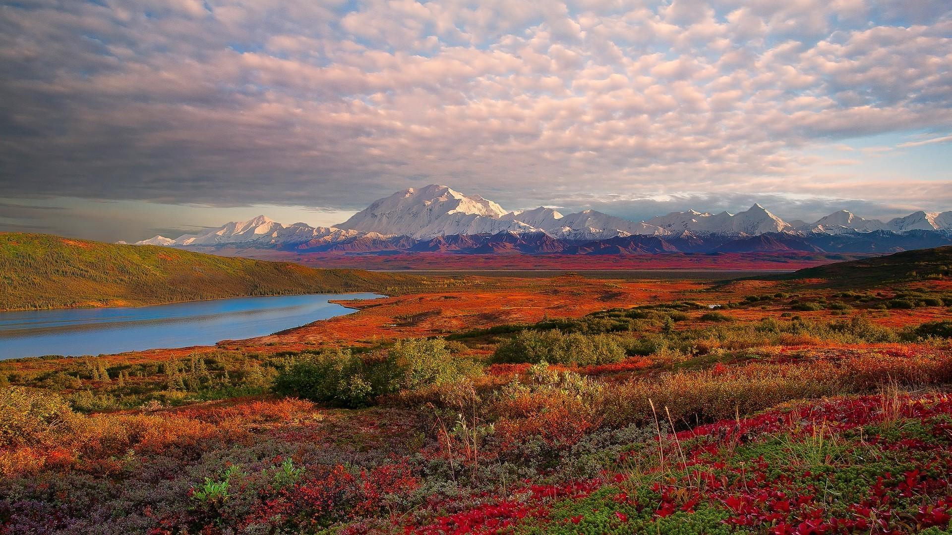 denali national park hd 31544