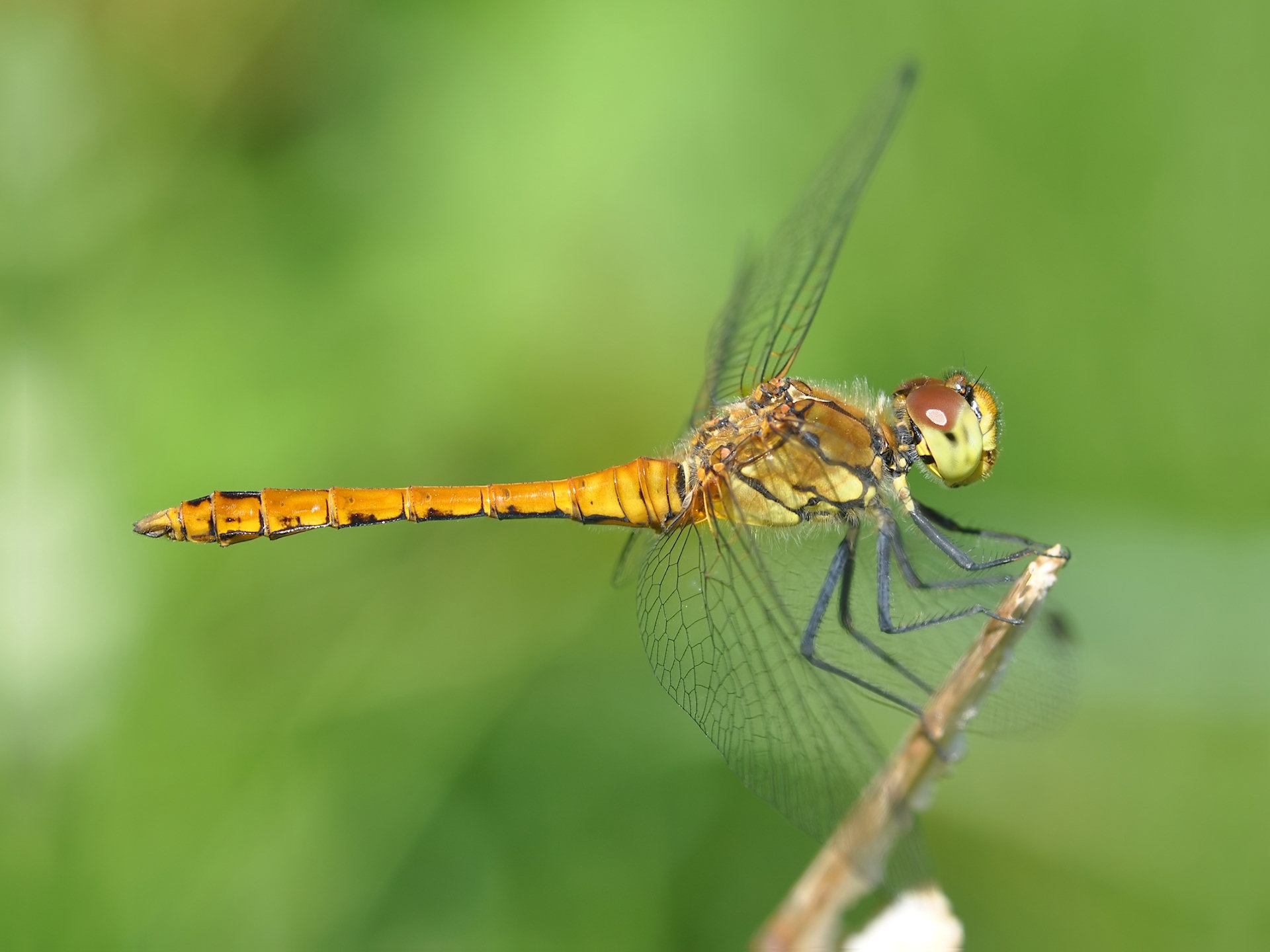 dragonfly wallpapers 39233