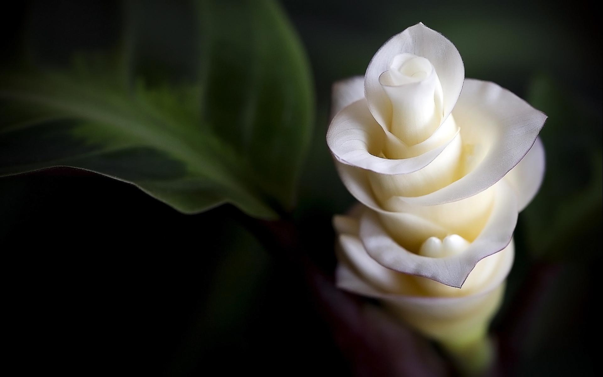 exotic flowers 15088