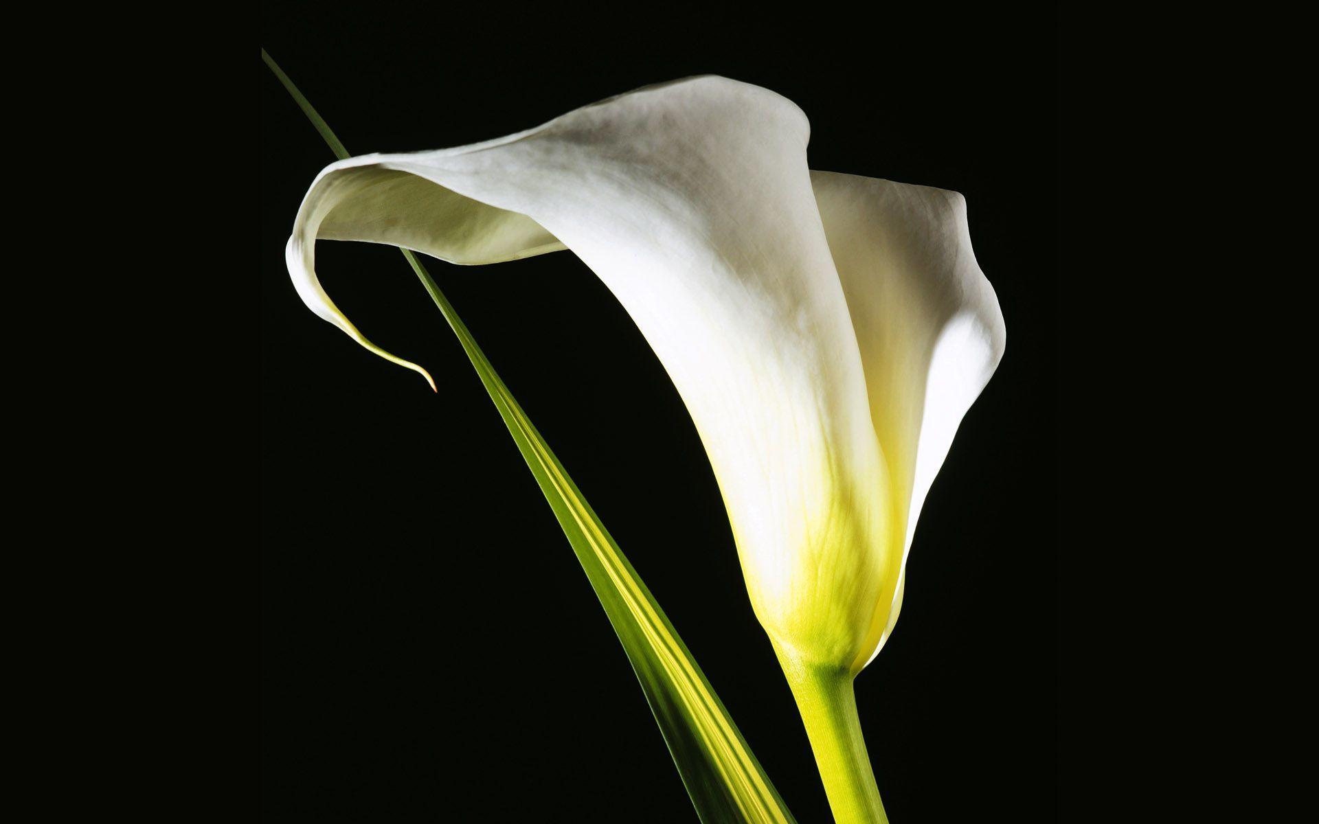 exotic flowers 15095