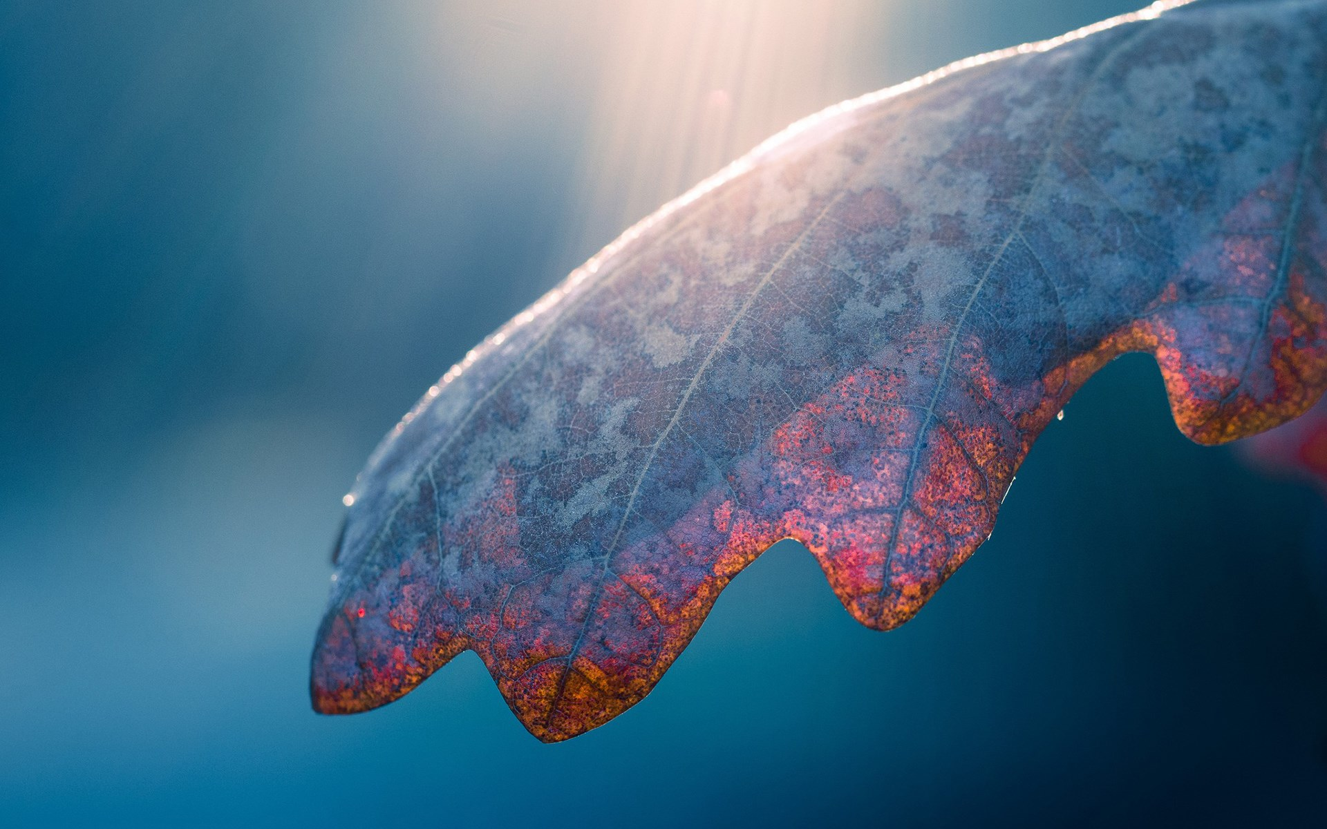 fantastic leaf macro wallpaper 39011