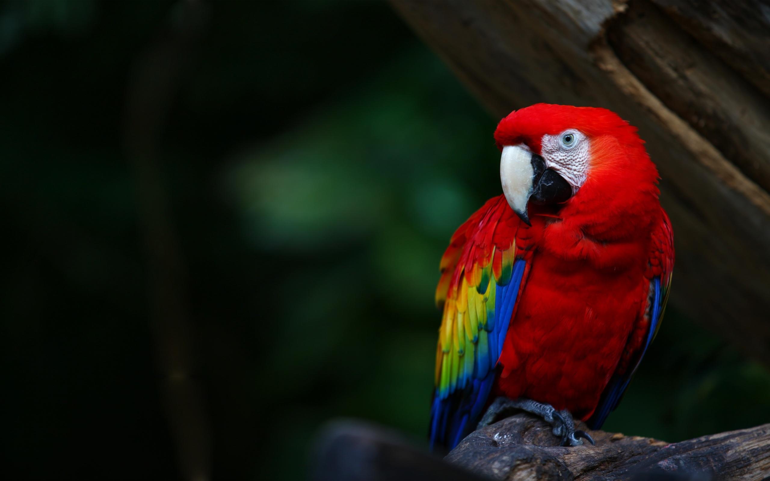 fantastic macaw wallpaper 35863