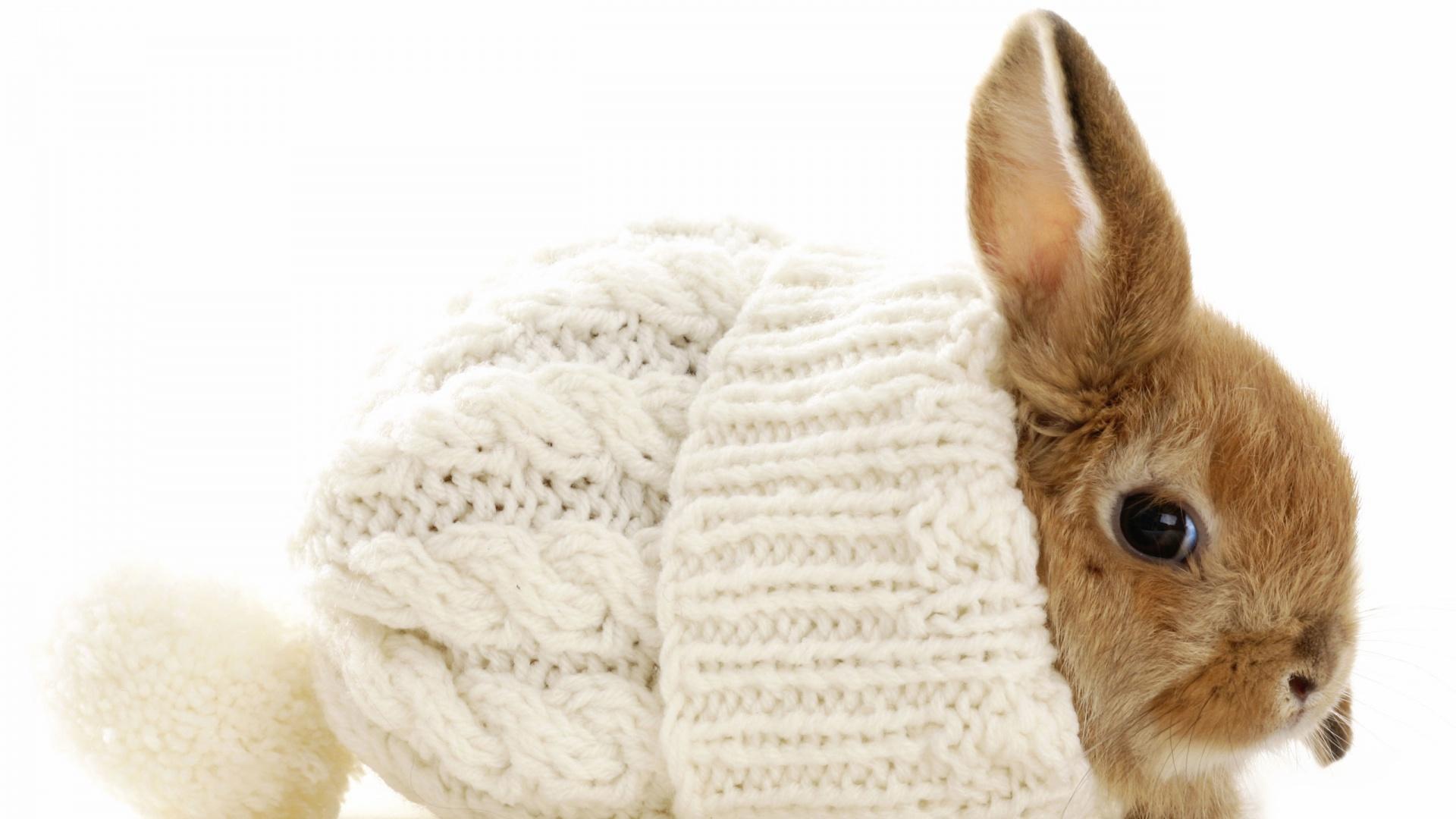 fantastic rabbit wallpaper 35244