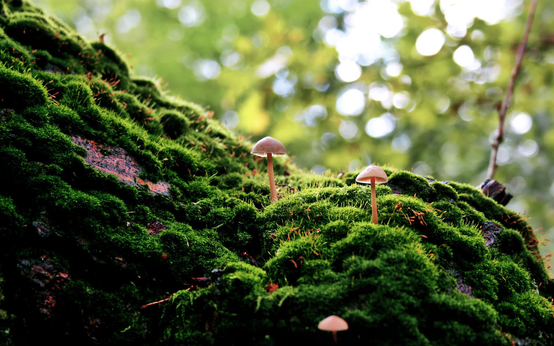 forest moss 34401