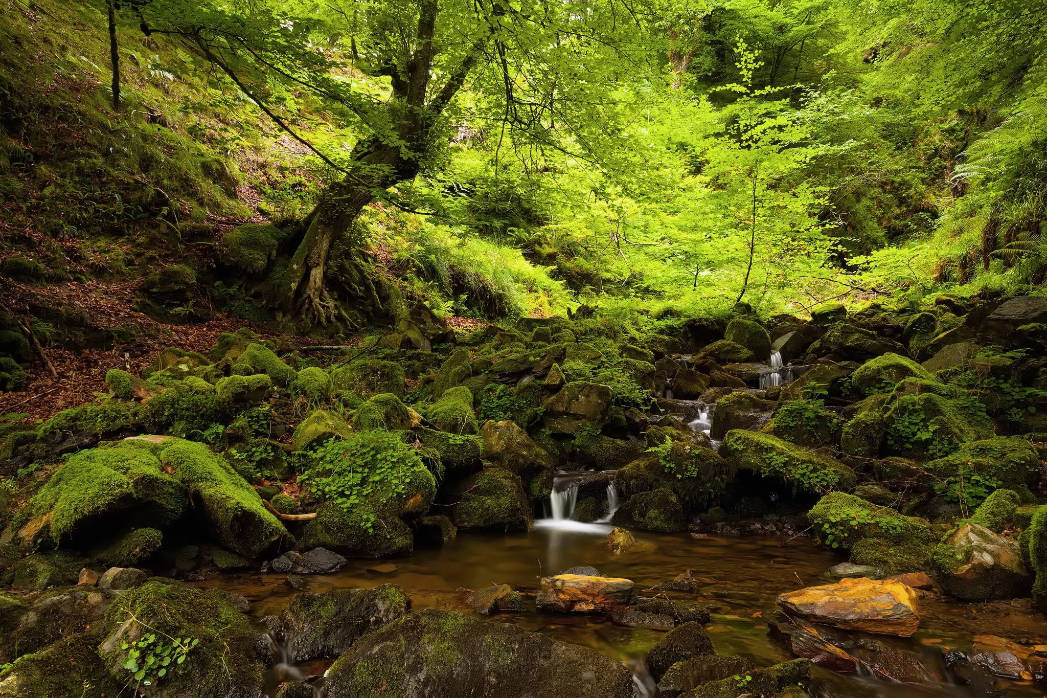 forest moss background 34393