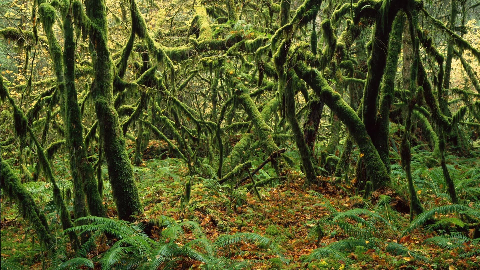 forest moss backgrounds 34400