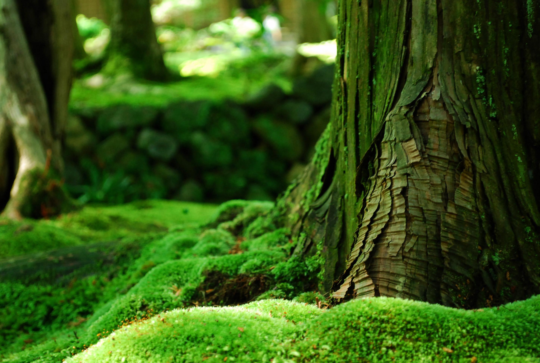 forest moss hd 34386
