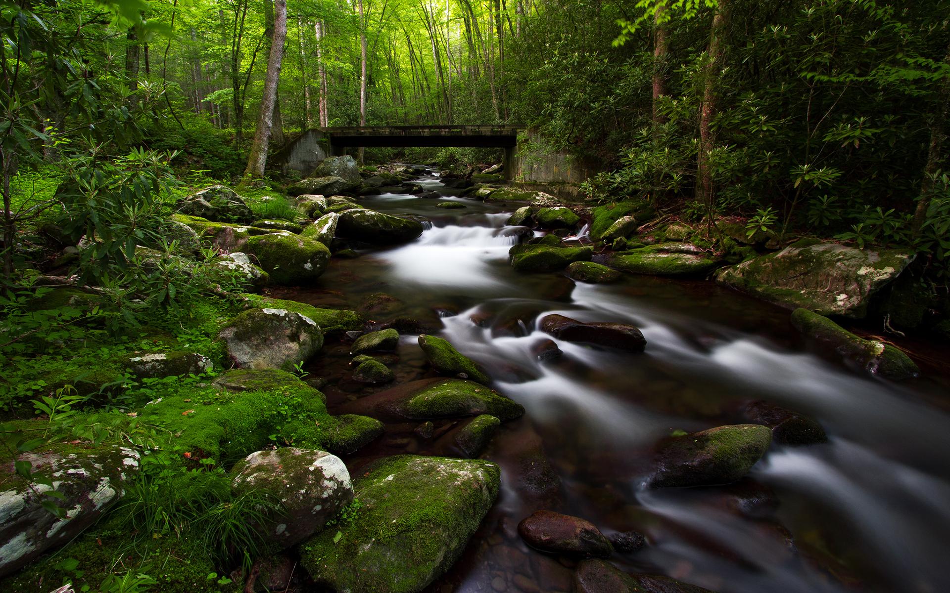forest moss wallpaper 34384