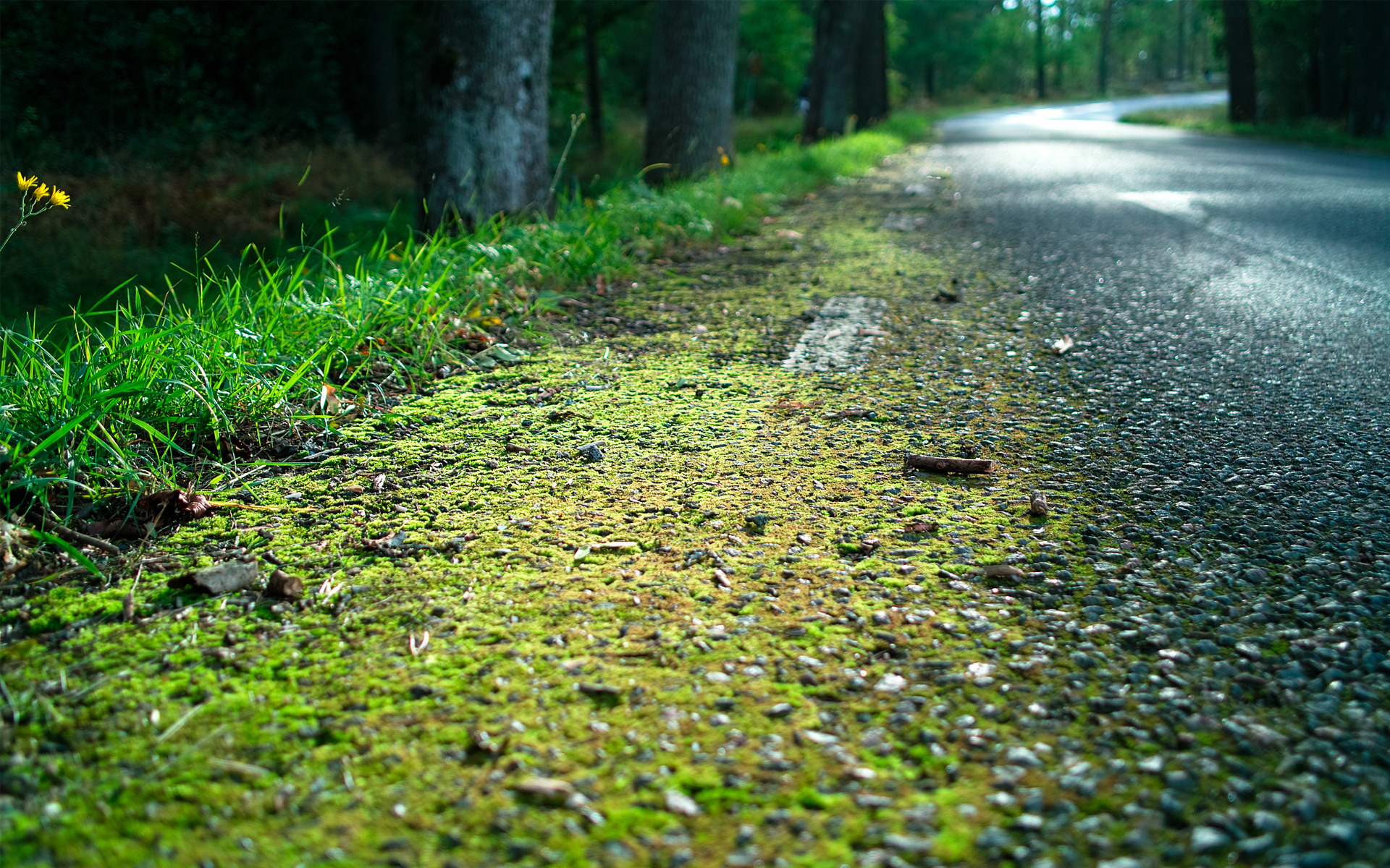 forest moss wallpaper 34397