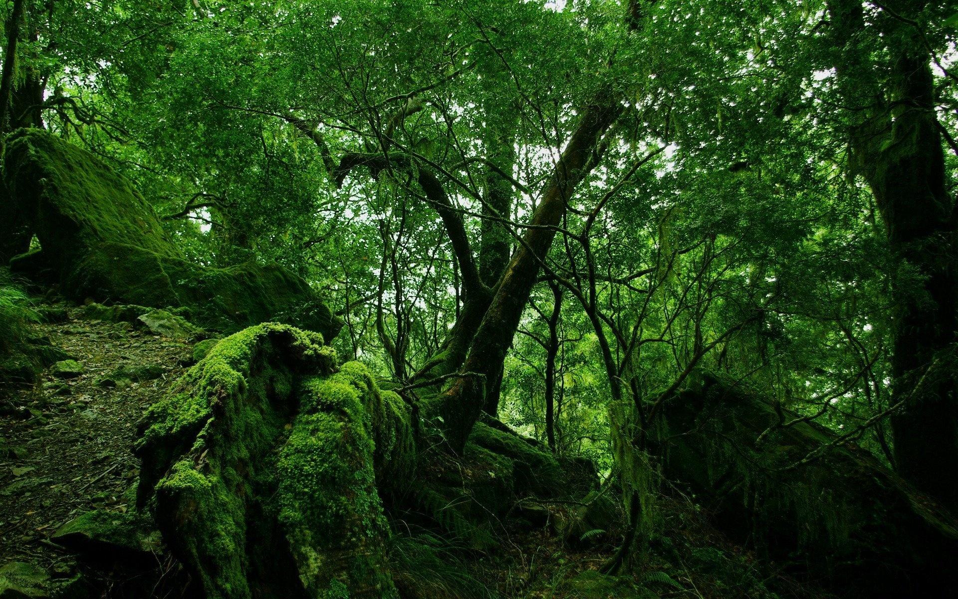 forest moss wallpaper 34399