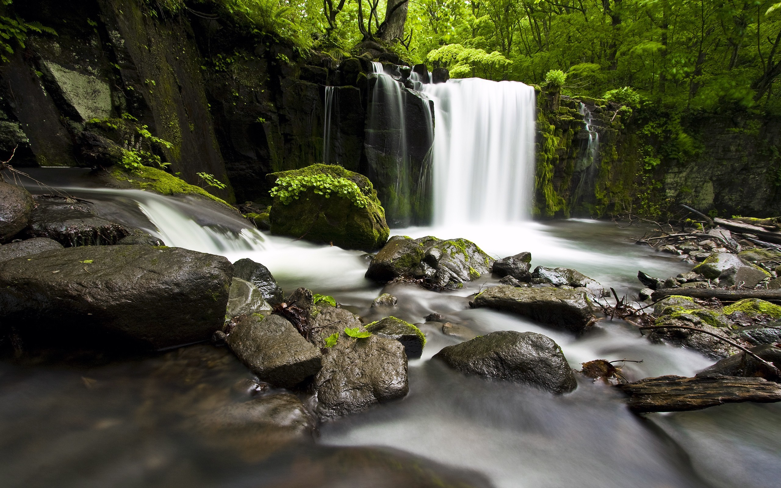 forest waterfall 34082