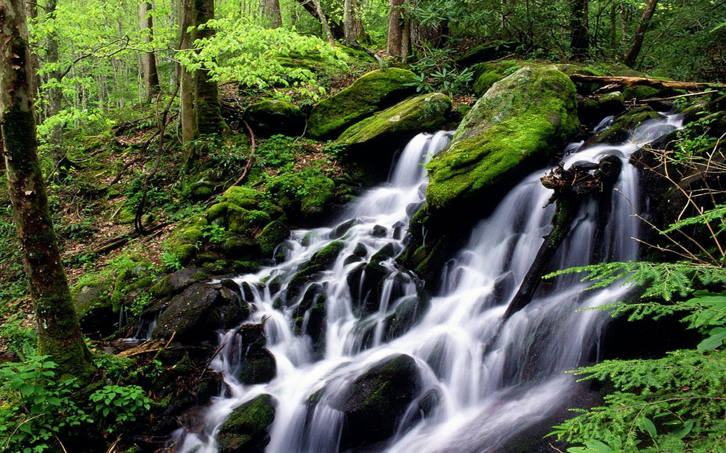 forest waterfall pictures 34079