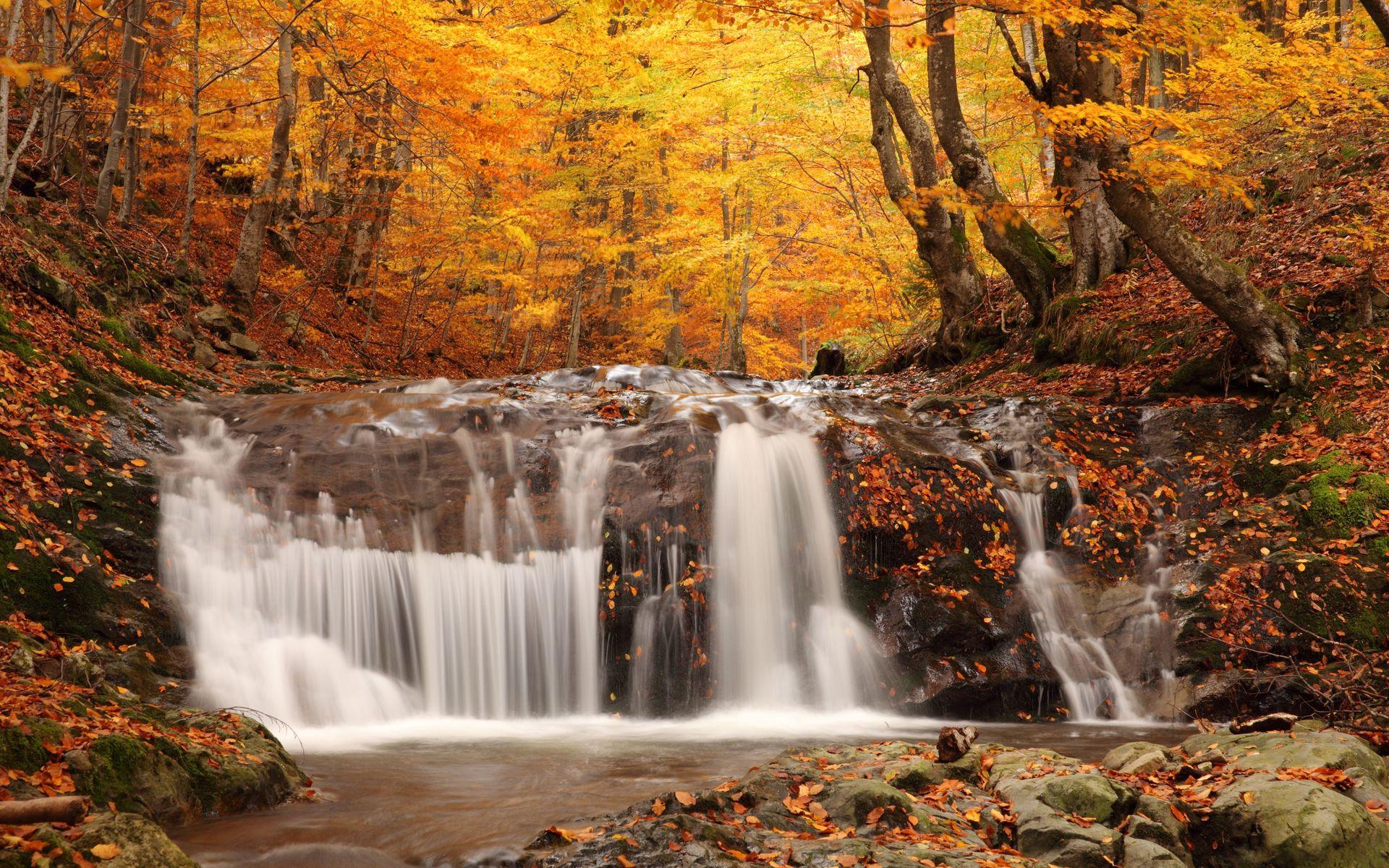 forest waterfall wallpaper 34057