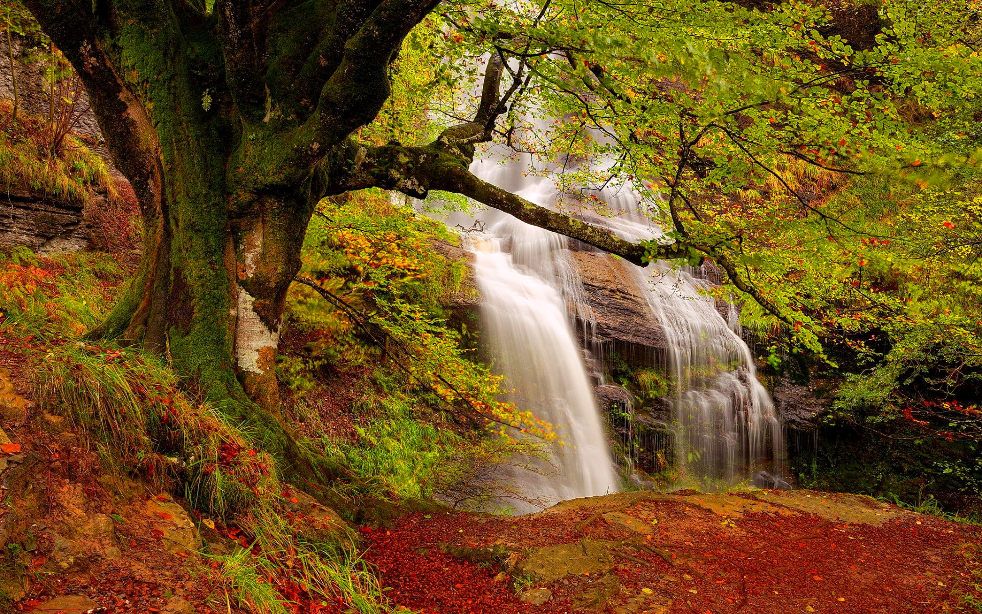 forest waterfall wallpapers 34069