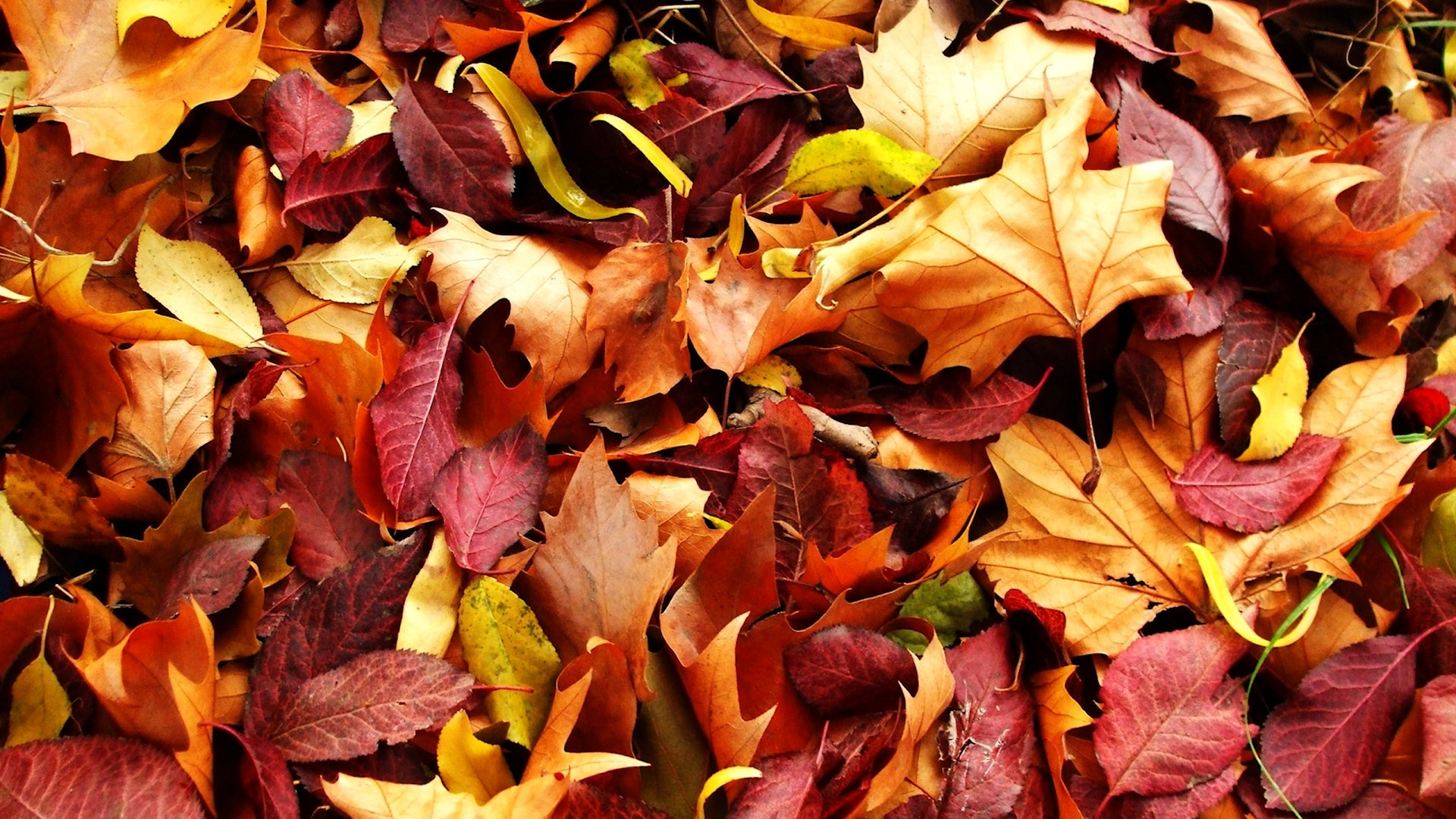 free autumn leaves wallpaper 33092