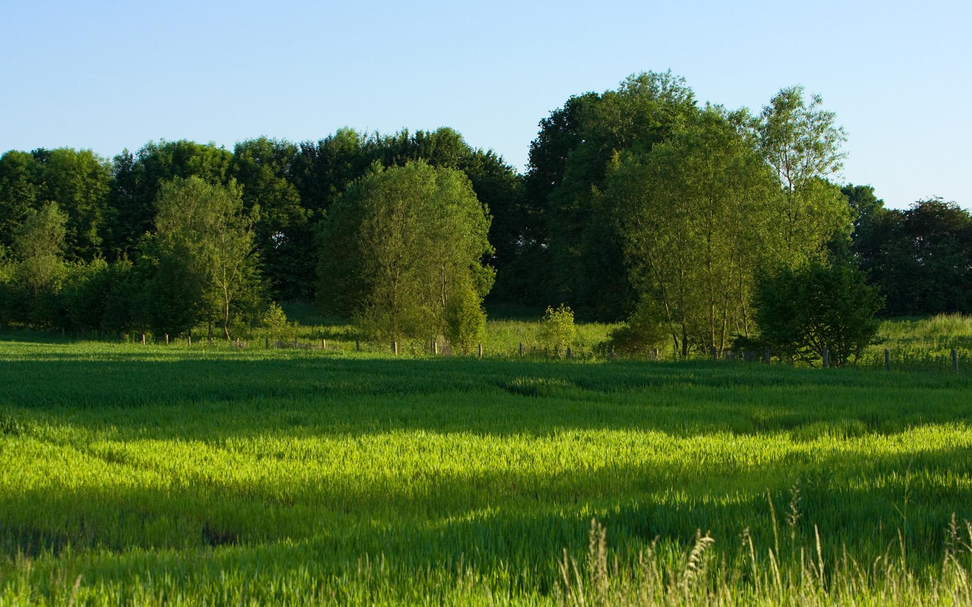 free grasslands wallpaper 39650