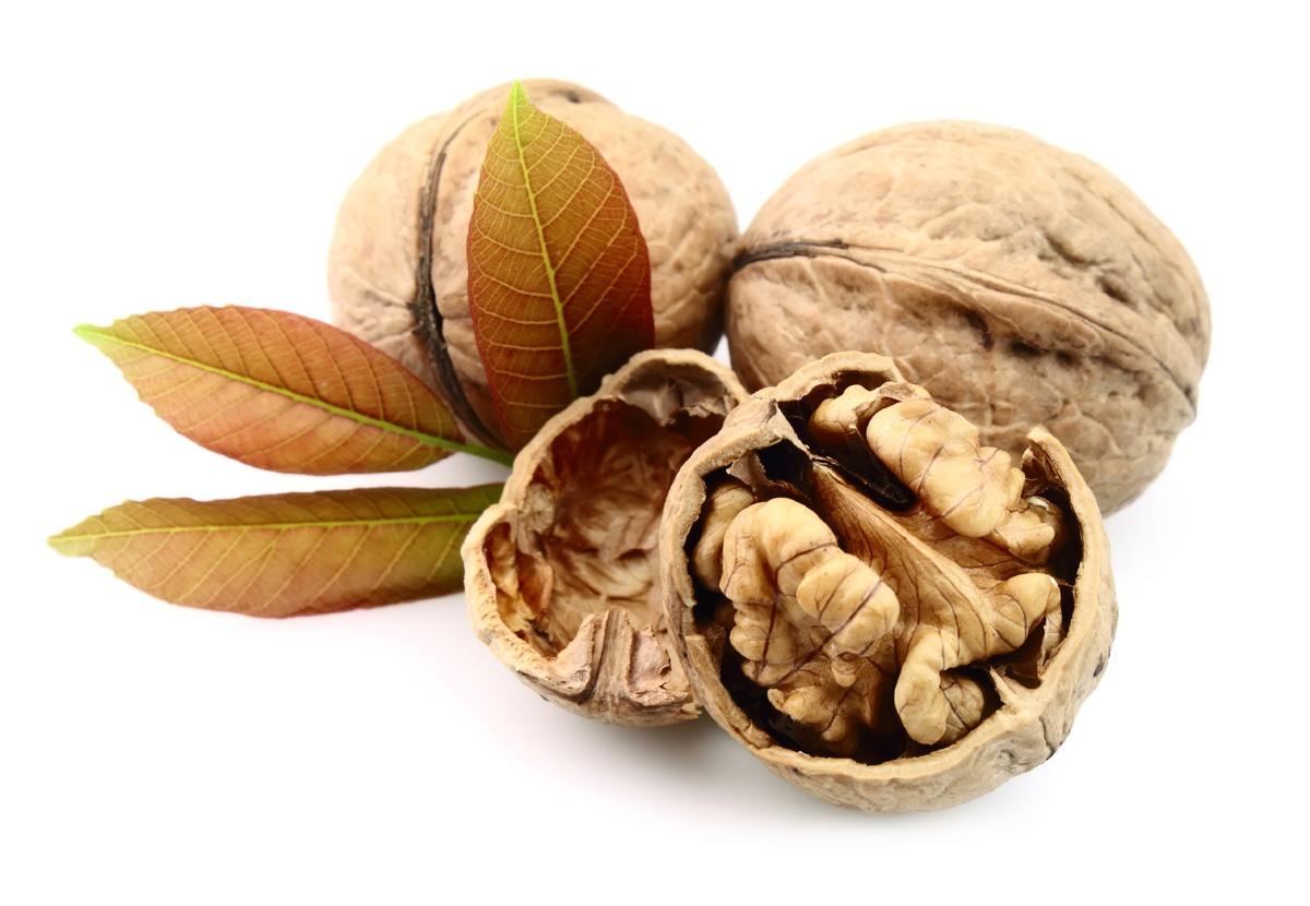 free walnut wallpaper 21982