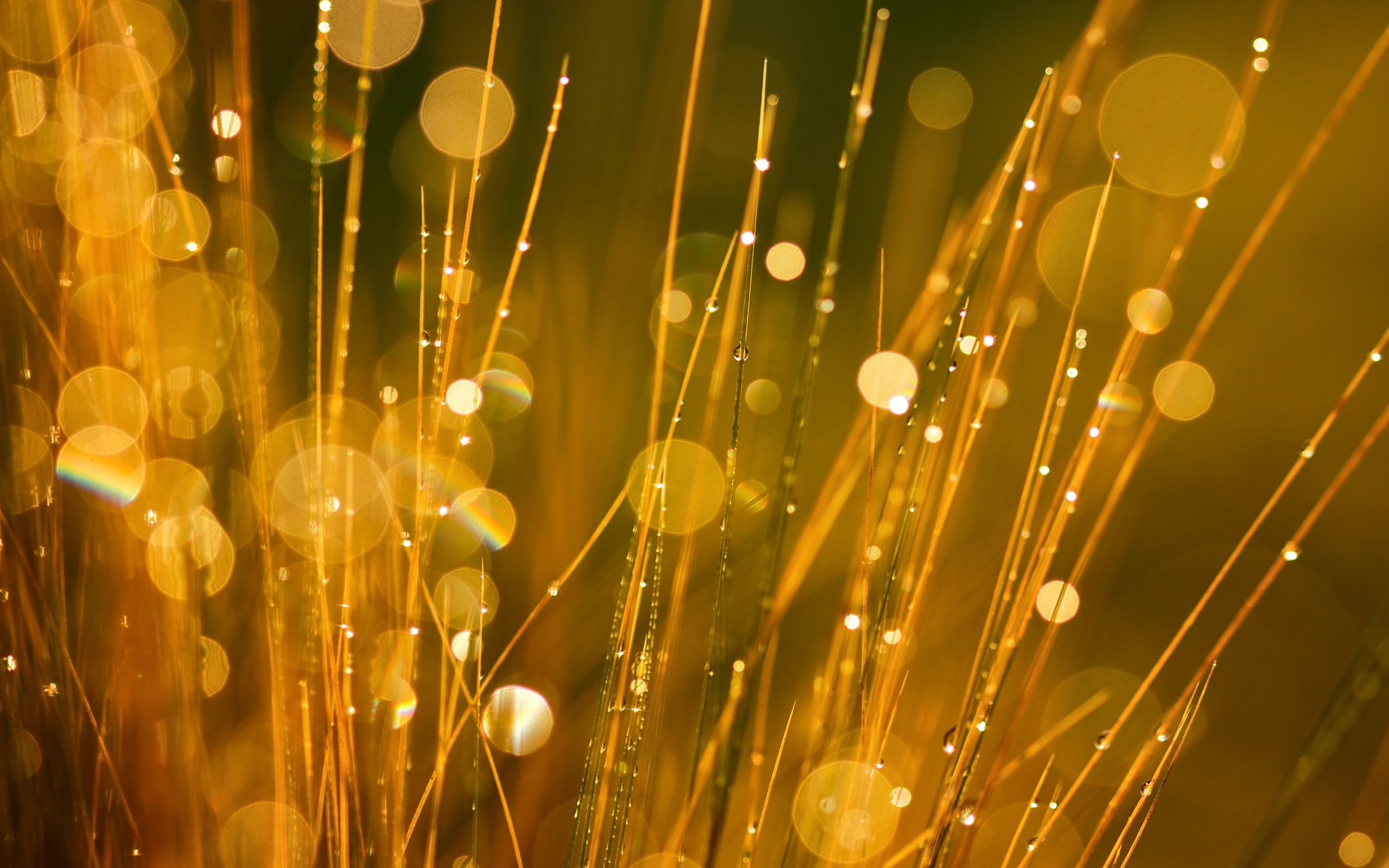 gold bokeh wallpaper 26007