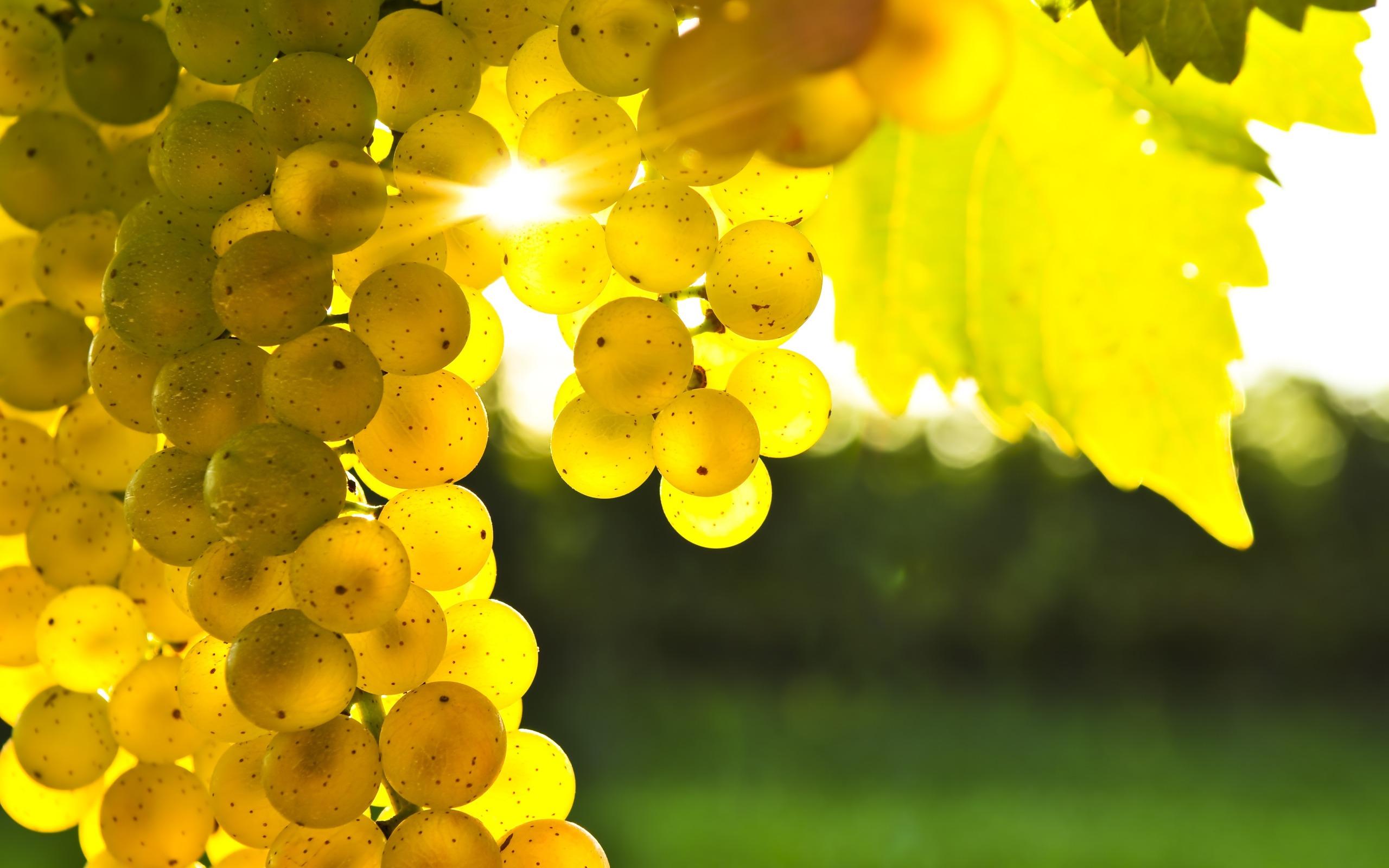 grapes wallpaper 20454