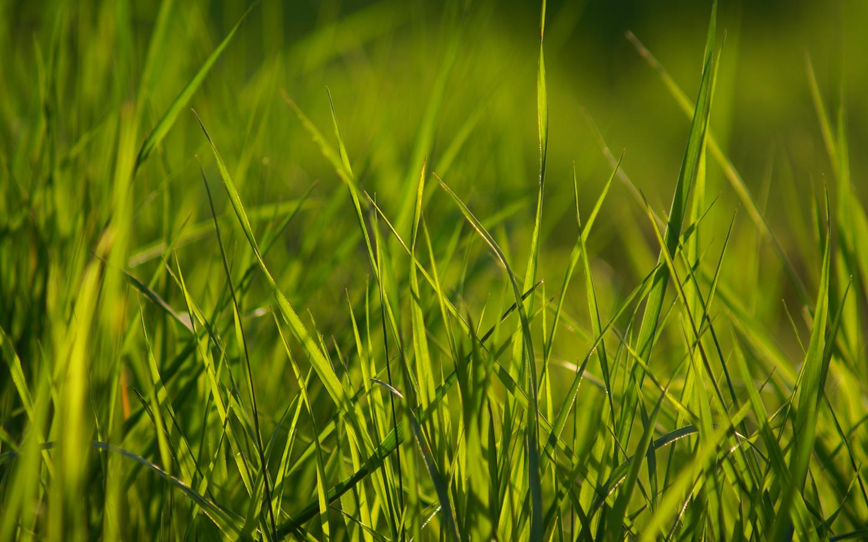 grass wallpaper 13878