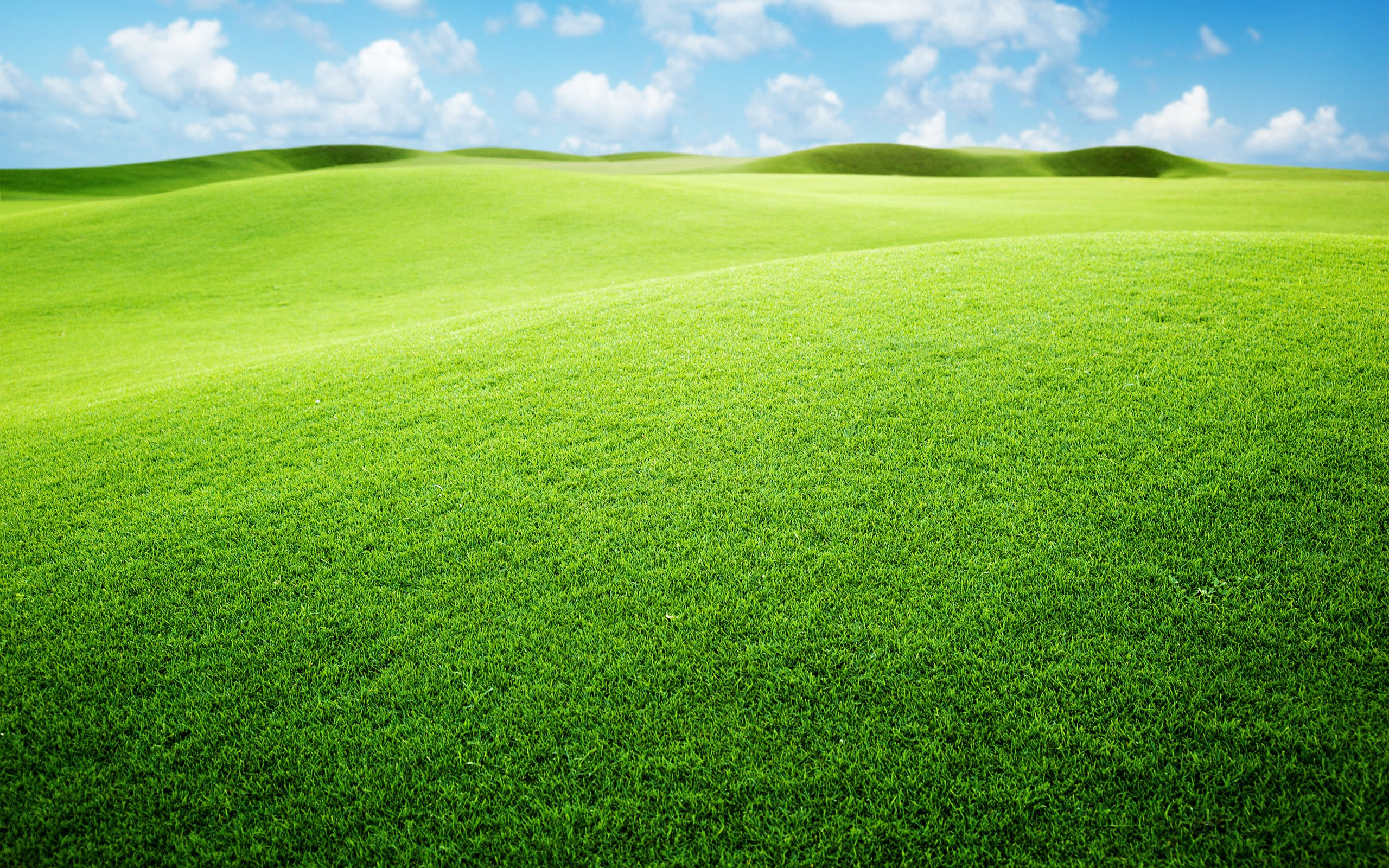 grasslands background 39652