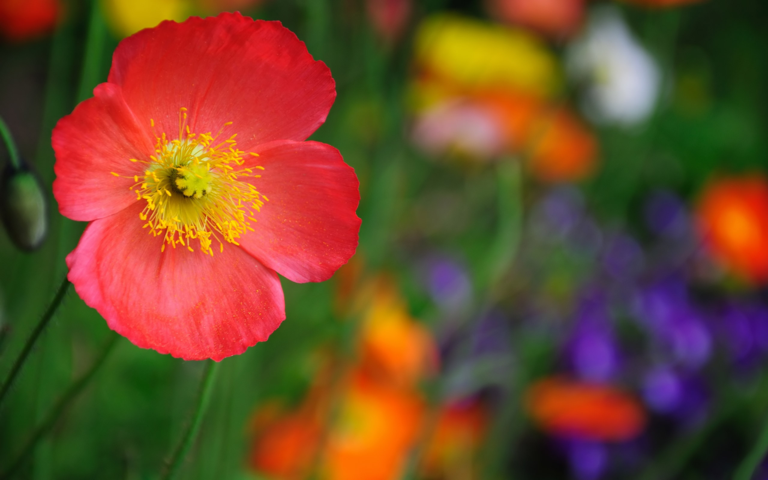high quality flower wallpapers 21754