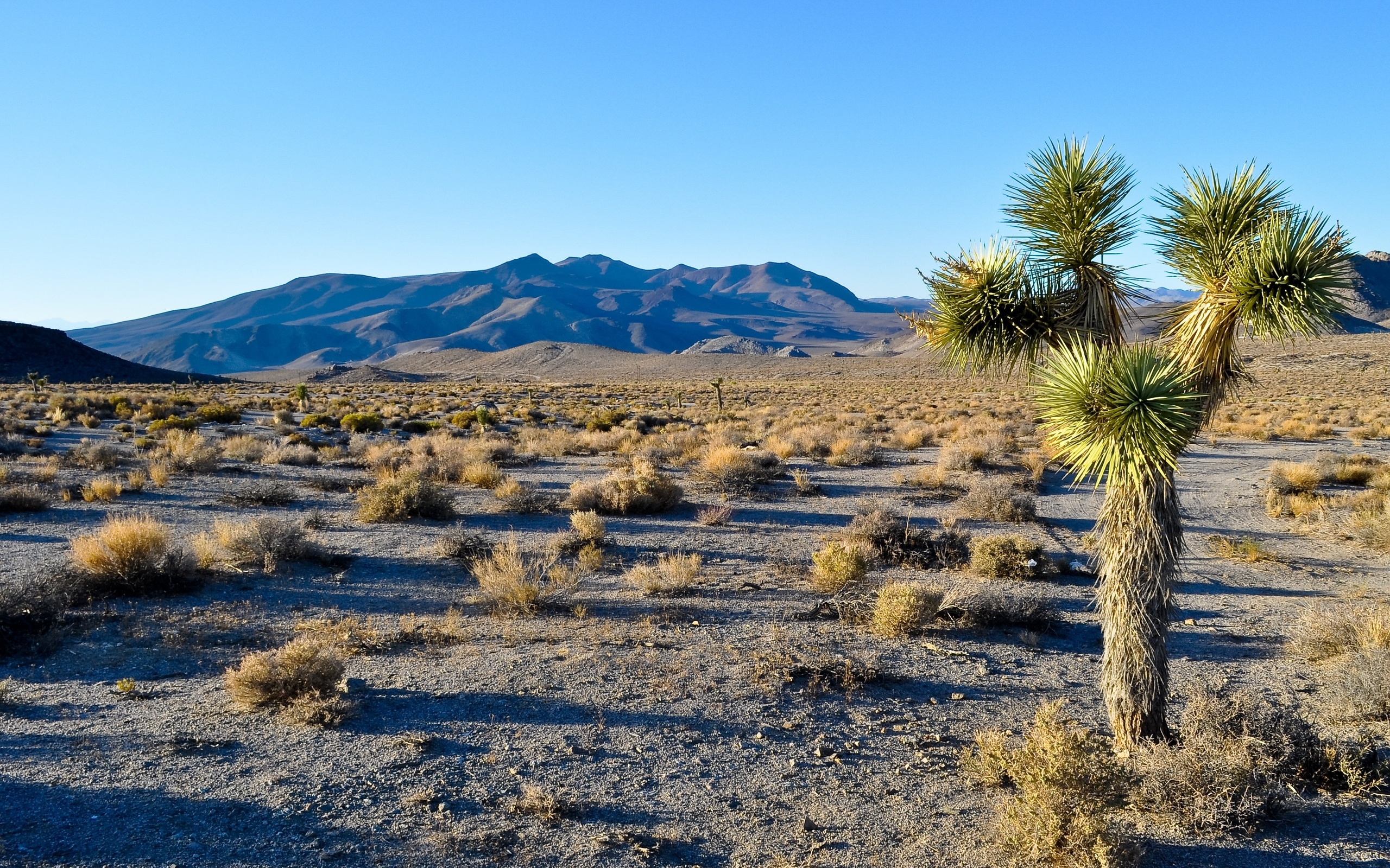 joshua tree wallpaper 32947