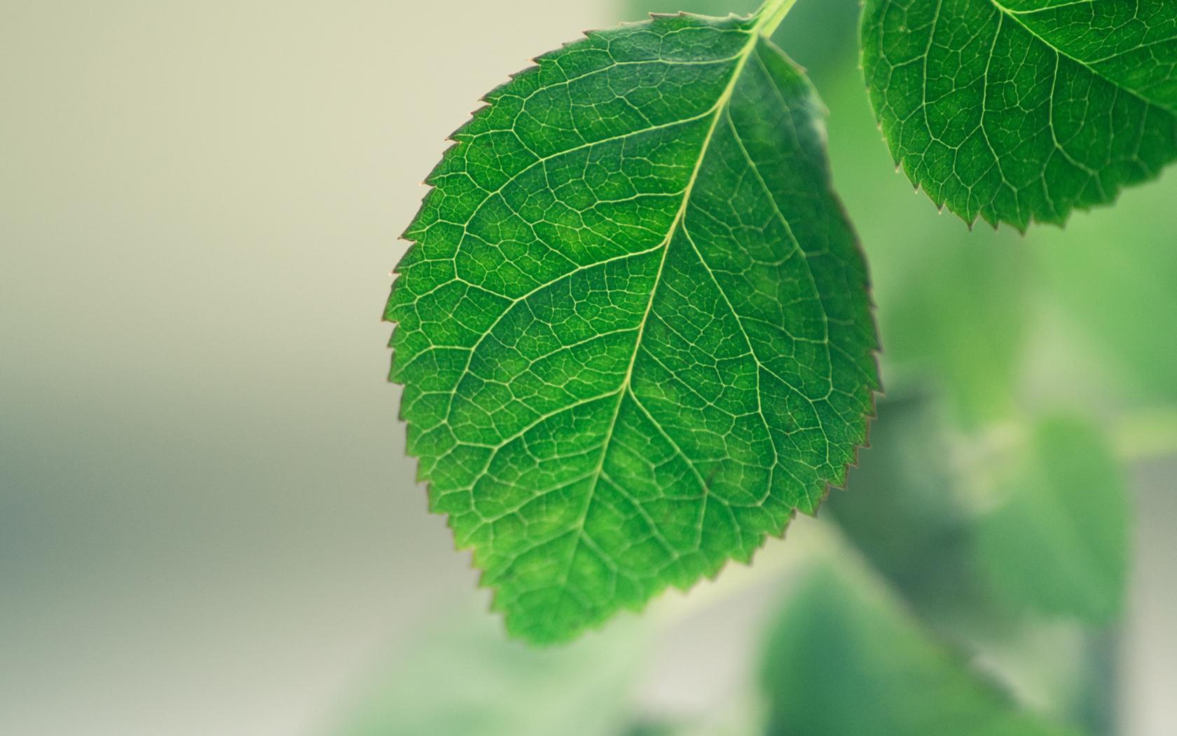 leaf macro 39027