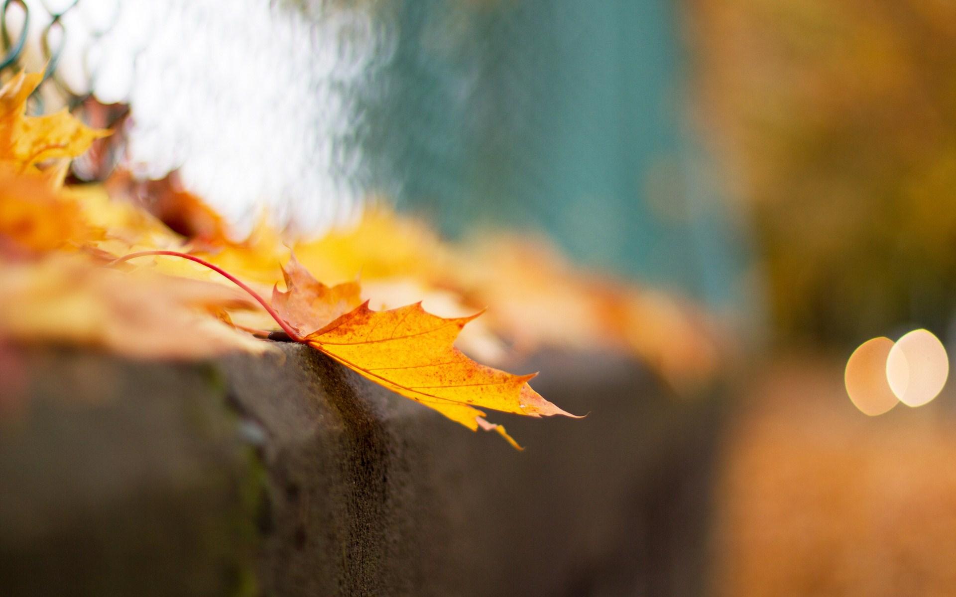 lovely leaf macro wallpaper 39015