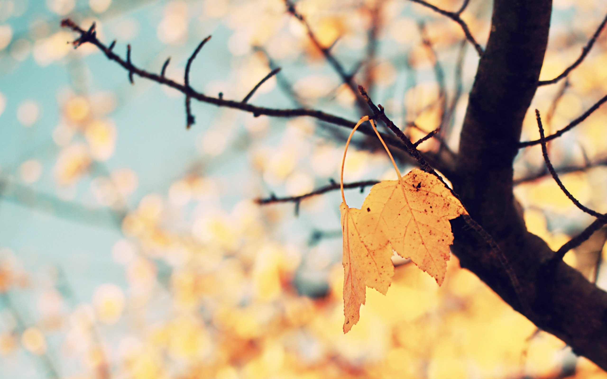Pretty Fall Background 42070 2560x1600px