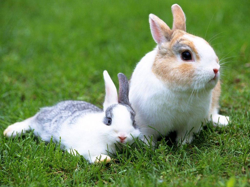 rabbit pictures 35239
