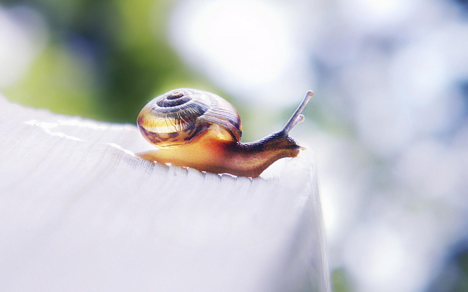 snail 35684